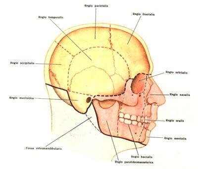 anatomy and art