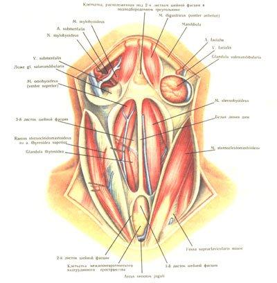 anatomy pictures art
